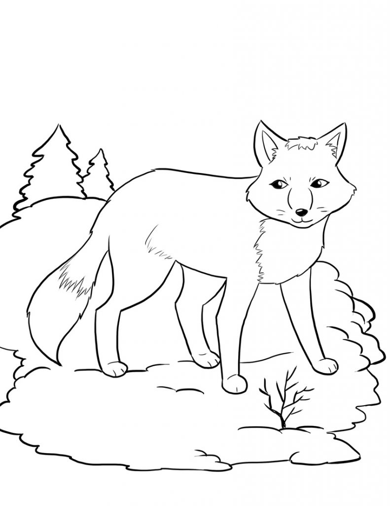 fox coloring pages grey fox coloring page free printable coloring pages coloring fox pages