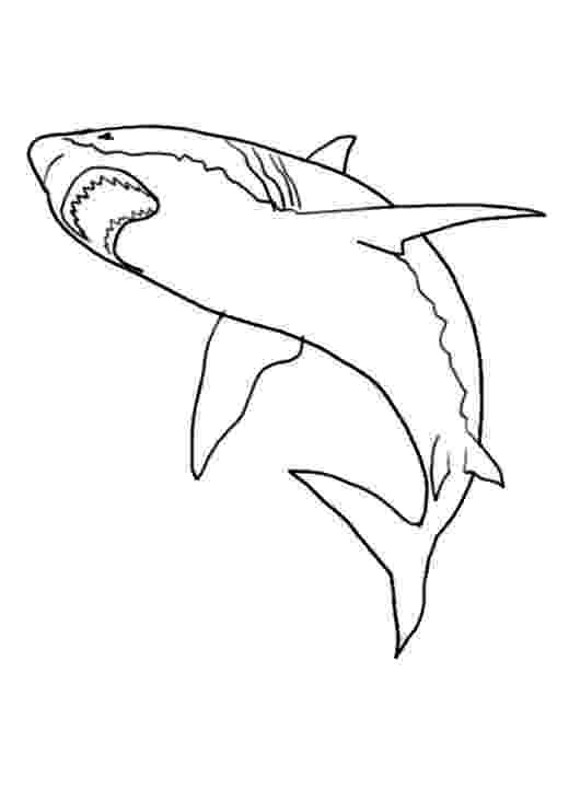 free coloring pages sharks international whale shark day a gift for you jen richards pages sharks free coloring