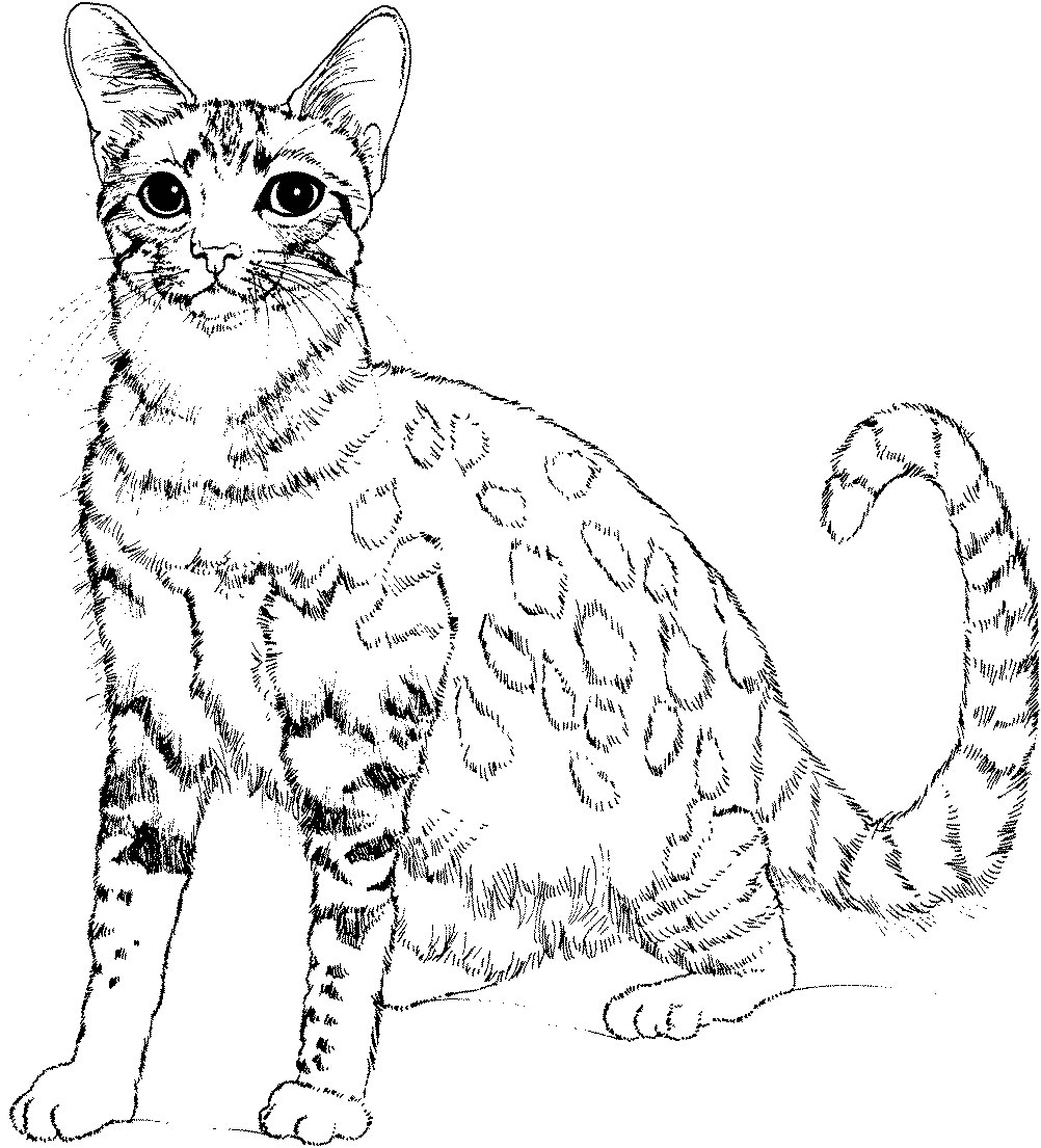 free coloring pictures of cats gatos gatinhos e gatões desenhos para colorir coloring free pictures cats of