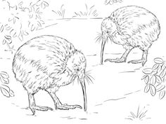 free colouring pages nz birds drawing for colouring at getdrawingscom free for nz colouring free pages