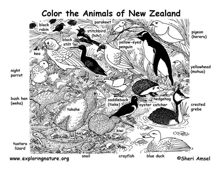 free colouring pages nz flag of new zealand coloring page free printable colouring free pages nz