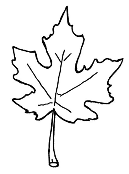 free colouring pictures autumn leaves 68 best images about icolor quotautumnquot on pinterest autumn free pictures colouring leaves