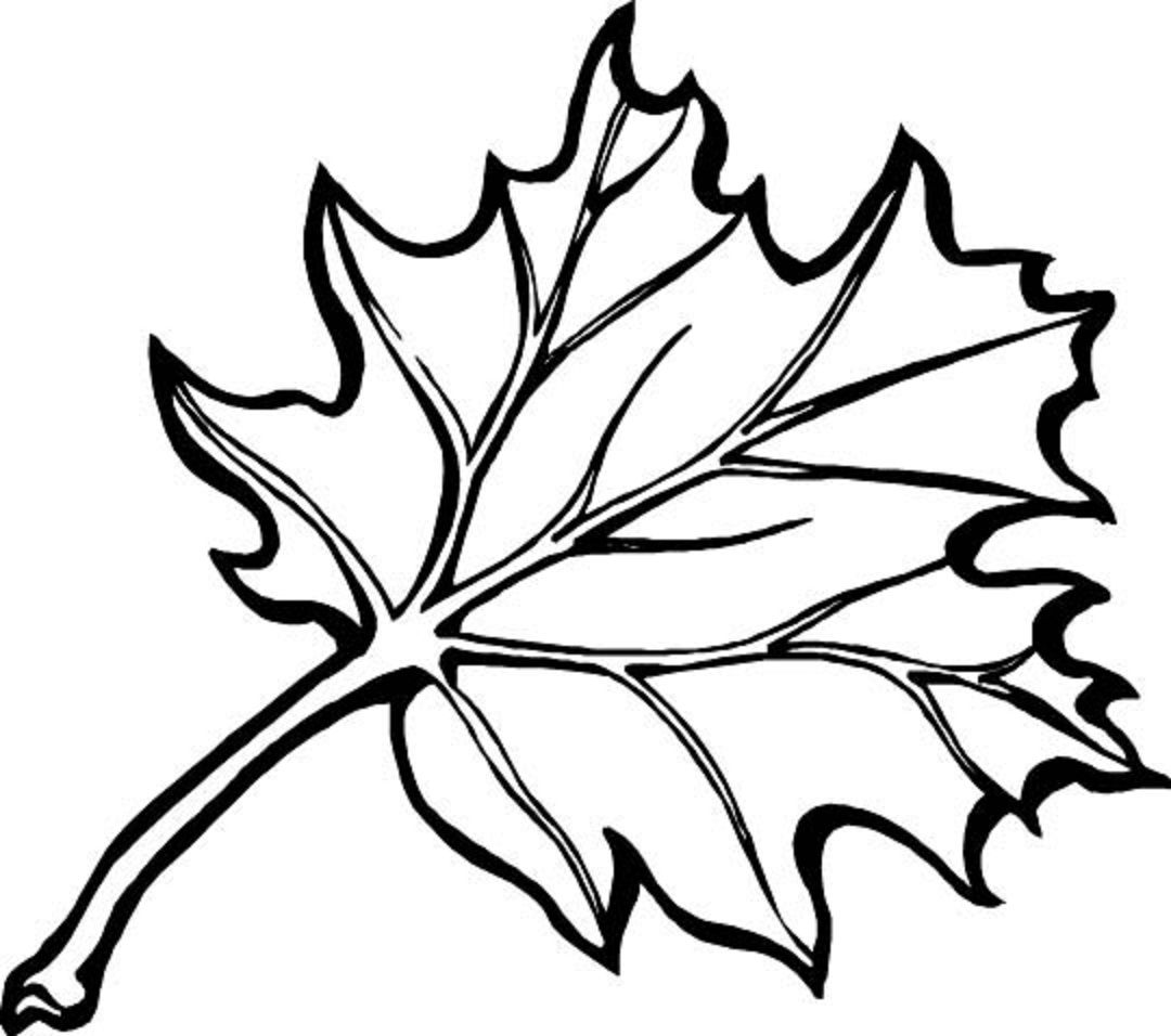 free colouring pictures autumn leaves fall leaves and acorns coloring pages for kids season pictures leaves colouring autumn free