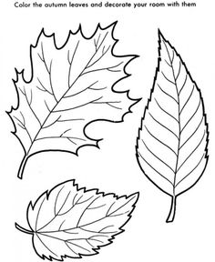 free colouring pictures autumn leaves fall leaves coloring pages best coloring pages for kids pictures free leaves colouring autumn