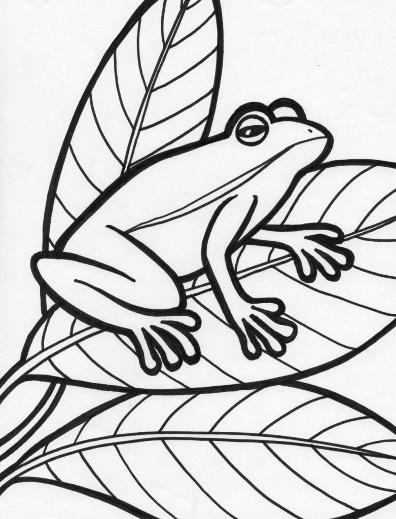 free frog coloring pages free printable frog coloring pages for kids coloring free frog pages