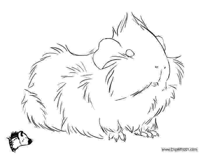 free guinea pig coloring pages awesome guinea pig coloring page awesome guinea pig free guinea coloring pig pages