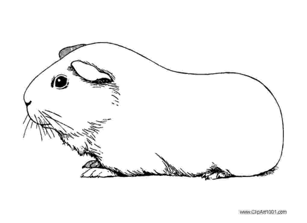 free guinea pig coloring pages cute baby guinea pig coloring page cute baby guinea pig free coloring guinea pig pages