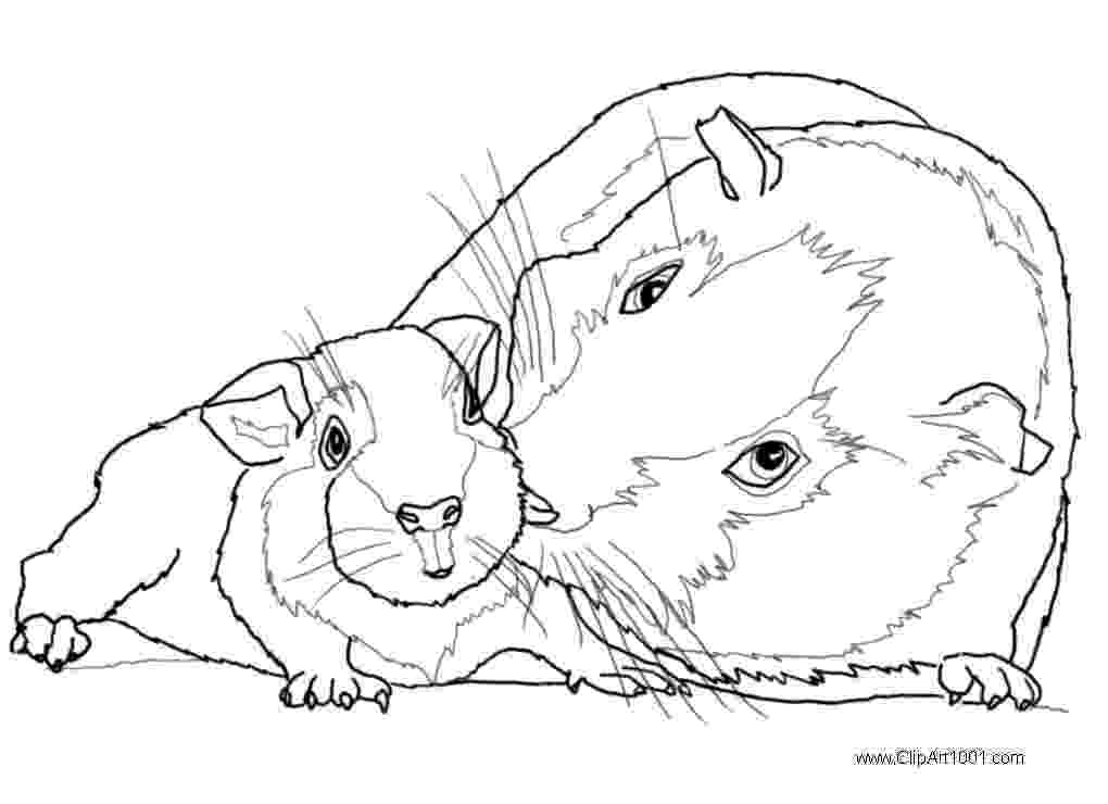 free guinea pig coloring pages guinea pig coloring page high quality coloring pages pages free guinea coloring pig