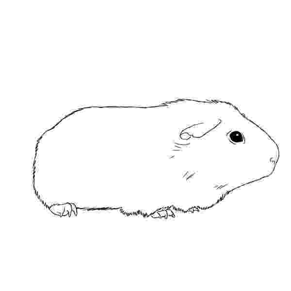 free guinea pig coloring pages guinea pig coloring pages at getcoloringscom free free pages coloring pig guinea