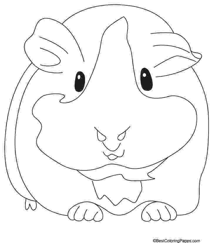 free guinea pig coloring pages guinea pig coloring pages black and white free printable free coloring guinea pages pig