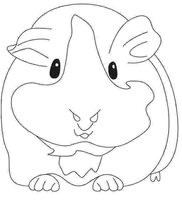 free guinea pig coloring pages guinea pig coloring pages by styx the avia free guinea coloring pig pages free