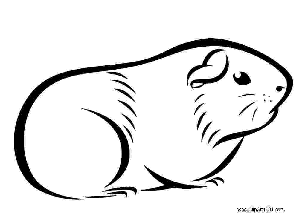free guinea pig coloring pages guinea pig coloring pages to download and print for free pig pages free coloring guinea