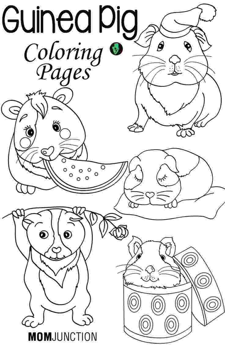 free guinea pig coloring pages pin by muse printables on coloring pages at coloringcafe pages free guinea coloring pig