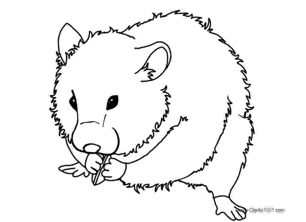 free guinea pig coloring pages top 25 free printable guinea pig coloring pages online guinea free pages pig coloring