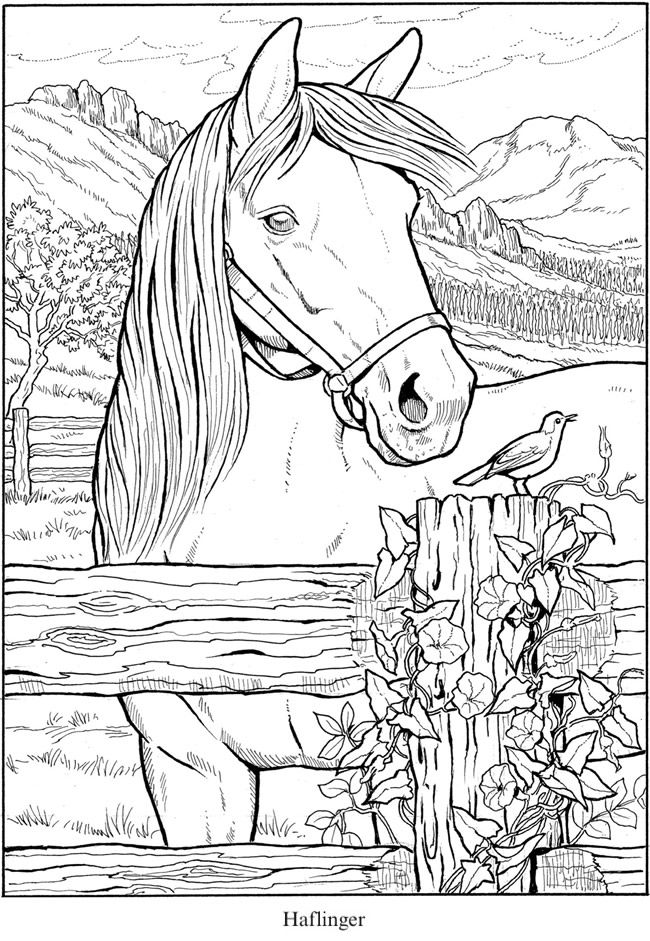 free horse coloring pages printable horse coloring pages free coloring pages 28 free horse coloring pages free printable