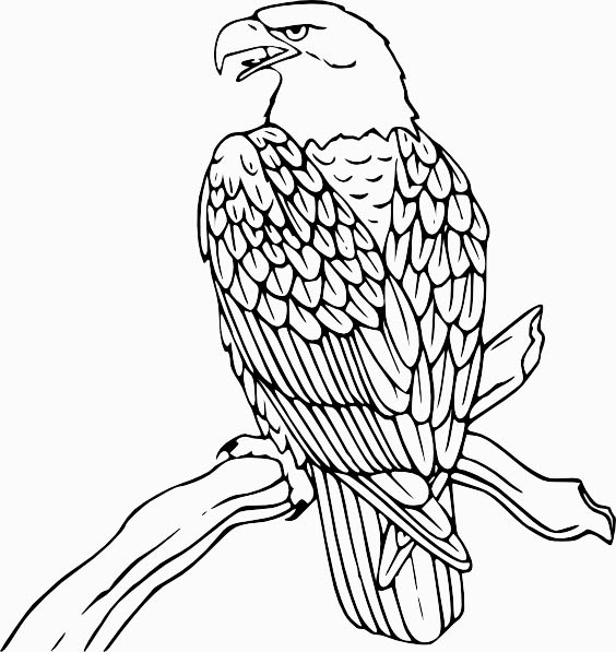 free printable coloring pages eagle eagle bird coloring pages to printable pages eagle coloring printable free
