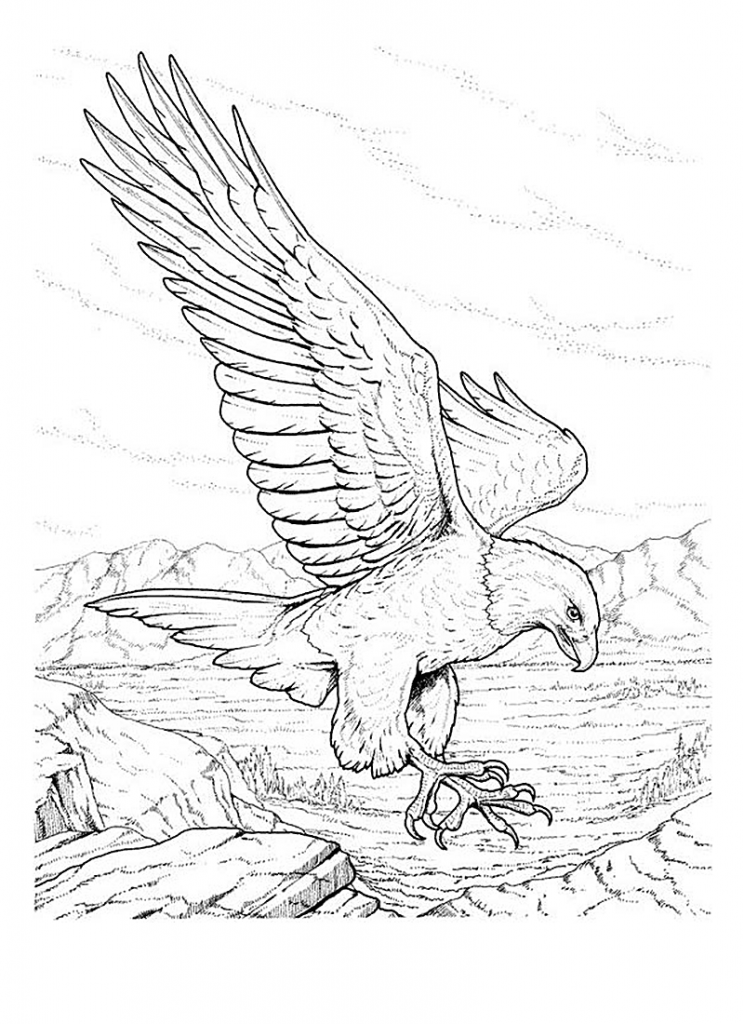 free printable coloring pages eagle free printable bald eagle coloring pages for kids printable free coloring eagle pages
