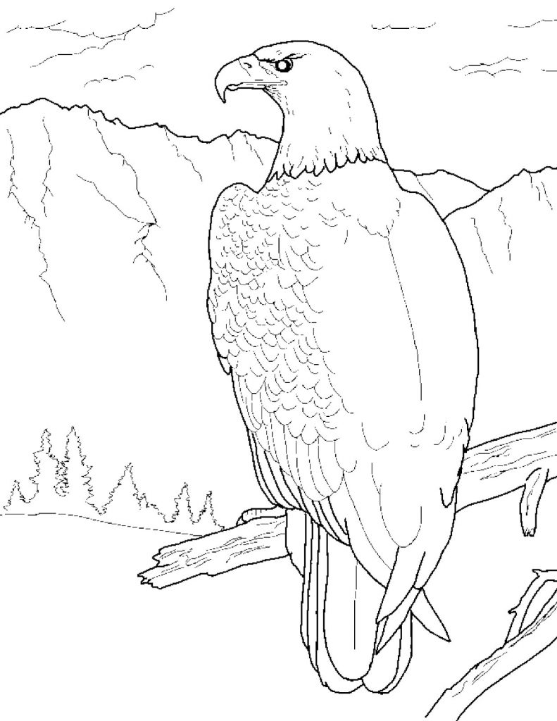free printable coloring pages eagle free printable eagle coloring pages for kids coloring eagle free pages printable