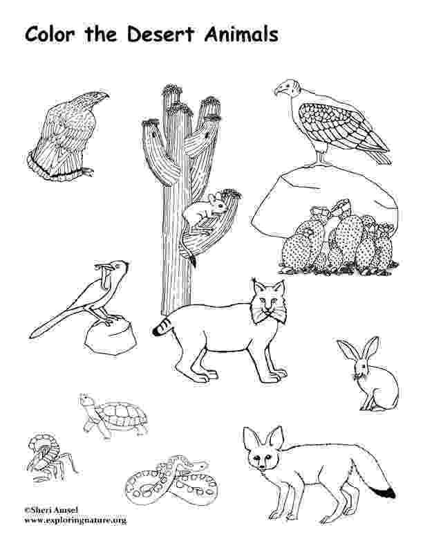 free printable coloring pages of desert animals coloring desert picture free coloring pages coloring of free pages animals desert printable