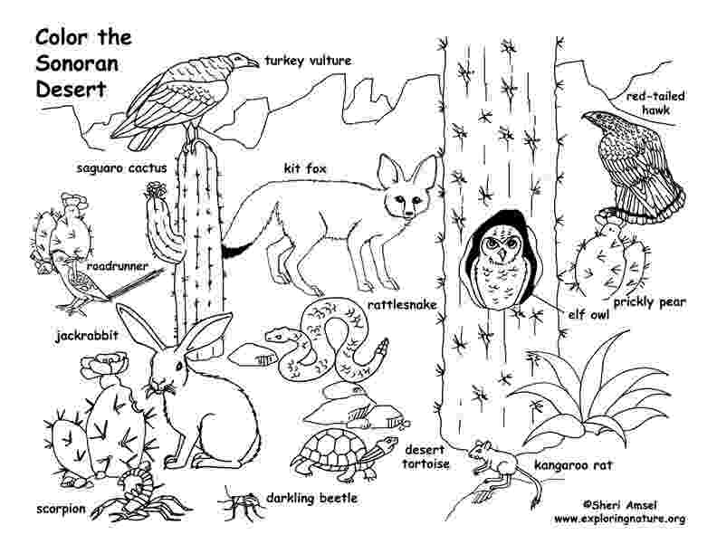 free printable coloring pages of desert animals desert animals coloring pages kids printable color on pages printable of free desert coloring animals