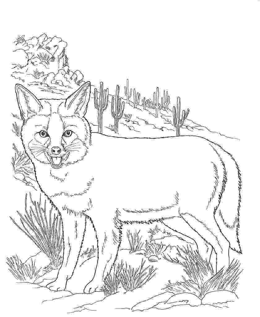 free printable coloring pages of desert animals desert coloring pages getcoloringpagescom desert coloring of printable animals pages free