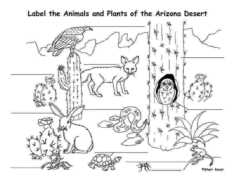free printable coloring pages of desert animals free printable desert coloring pages sketch coloring page animals coloring desert of printable free pages