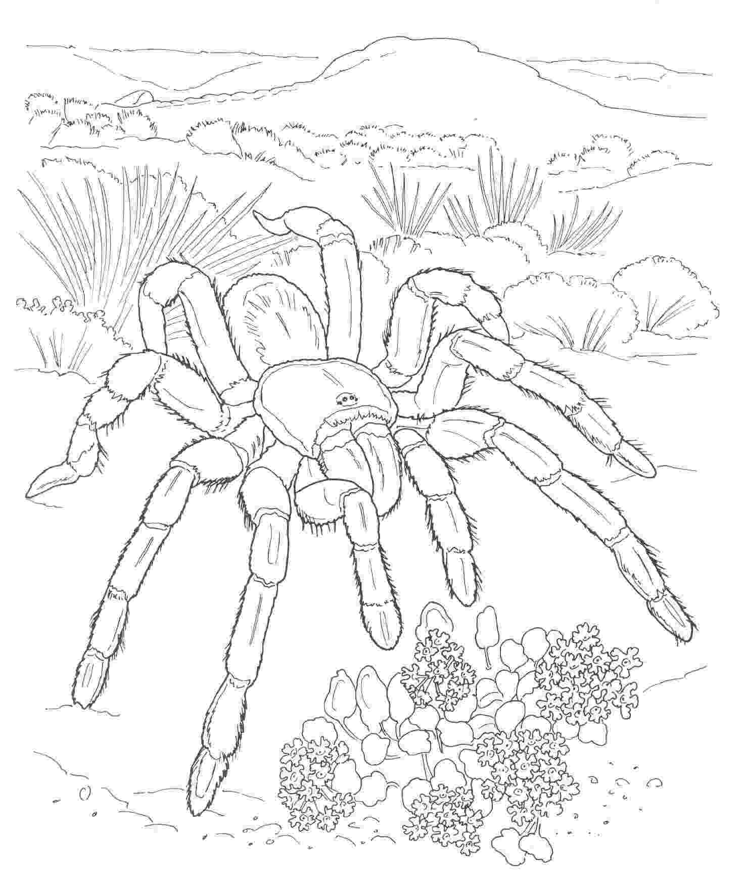 free printable coloring pages of desert animals free printable desert coloring pages sketch coloring page free pages animals desert printable of coloring