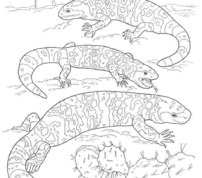 free printable coloring pages of desert animals pin on desert coloring pages desert free of printable animals