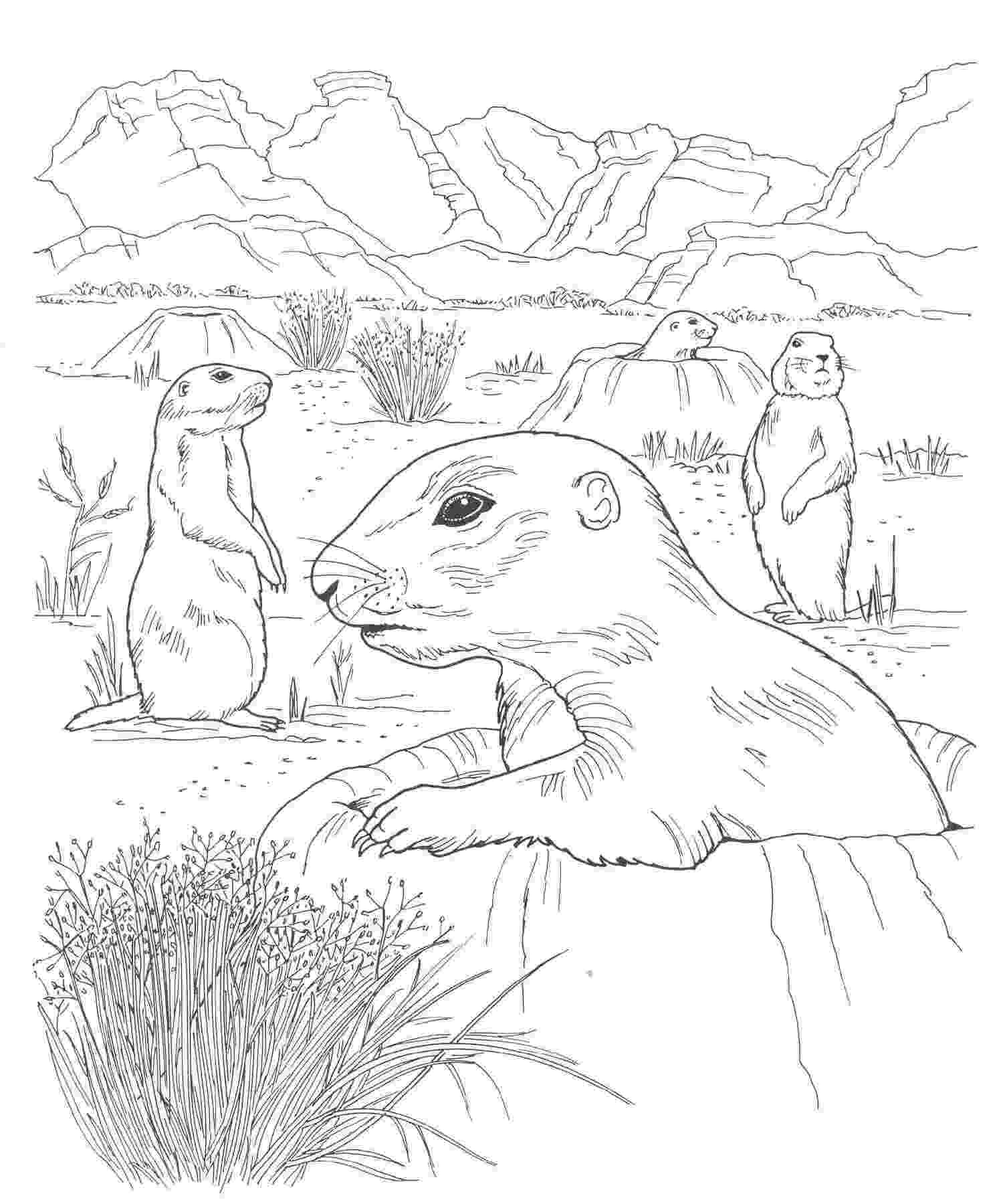 free printable coloring pages of desert animals printable coloring pages of desert animals coloring page printable desert animals free coloring of pages