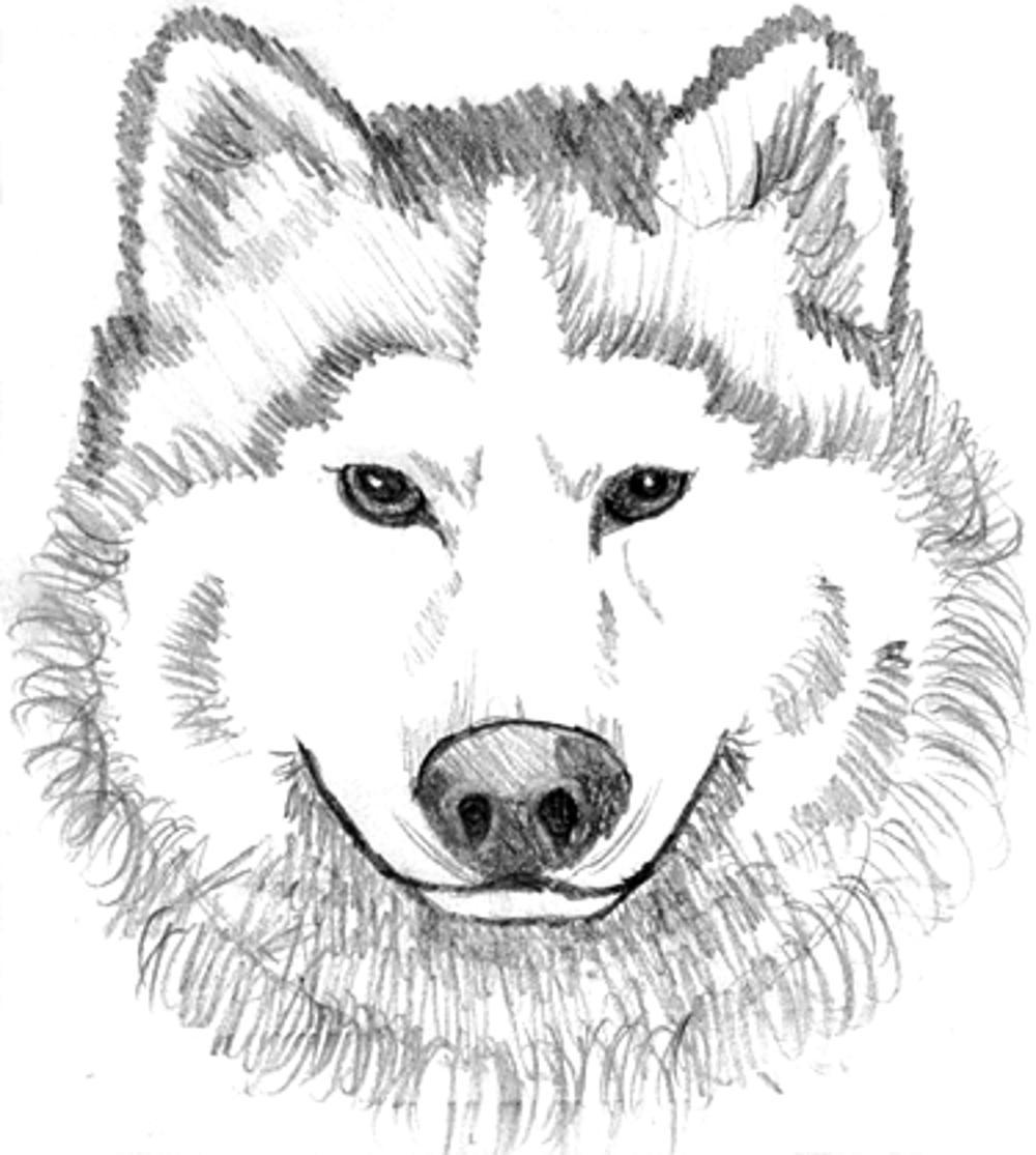 free printable coloring pages wolf wolf coloring pages 360coloringpages printable coloring wolf pages free