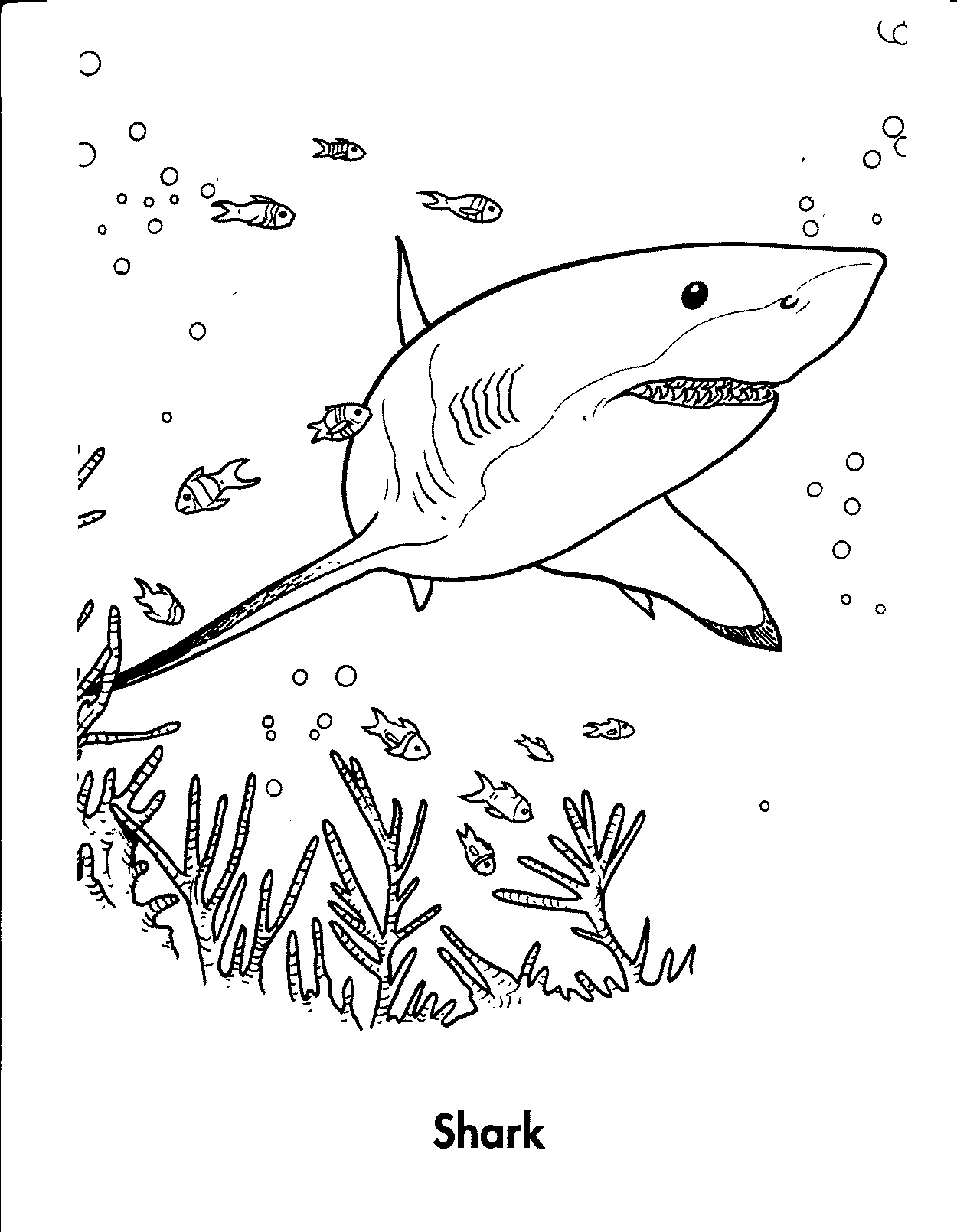 free printable shark coloring pages shark wax shark pages printable coloring free