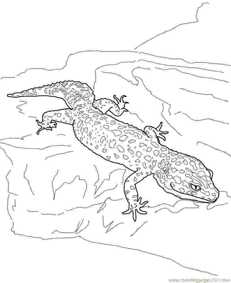 gecko lizard coloring pages gecko coloring pages best coloring pages for kids gecko pages coloring lizard