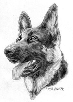 german shepherd pictures to print 505 best gsd drawings paint images in 2019 dog art print shepherd german to pictures