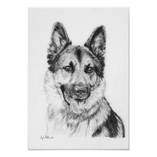 german shepherd pictures to print german shepherd 1963 vintage dog print matted ebay shepherd to german print pictures