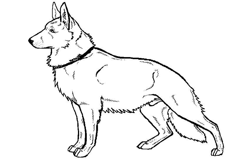 german shepherd pictures to print german shepherd multi colored coloring pages print print pictures to shepherd german