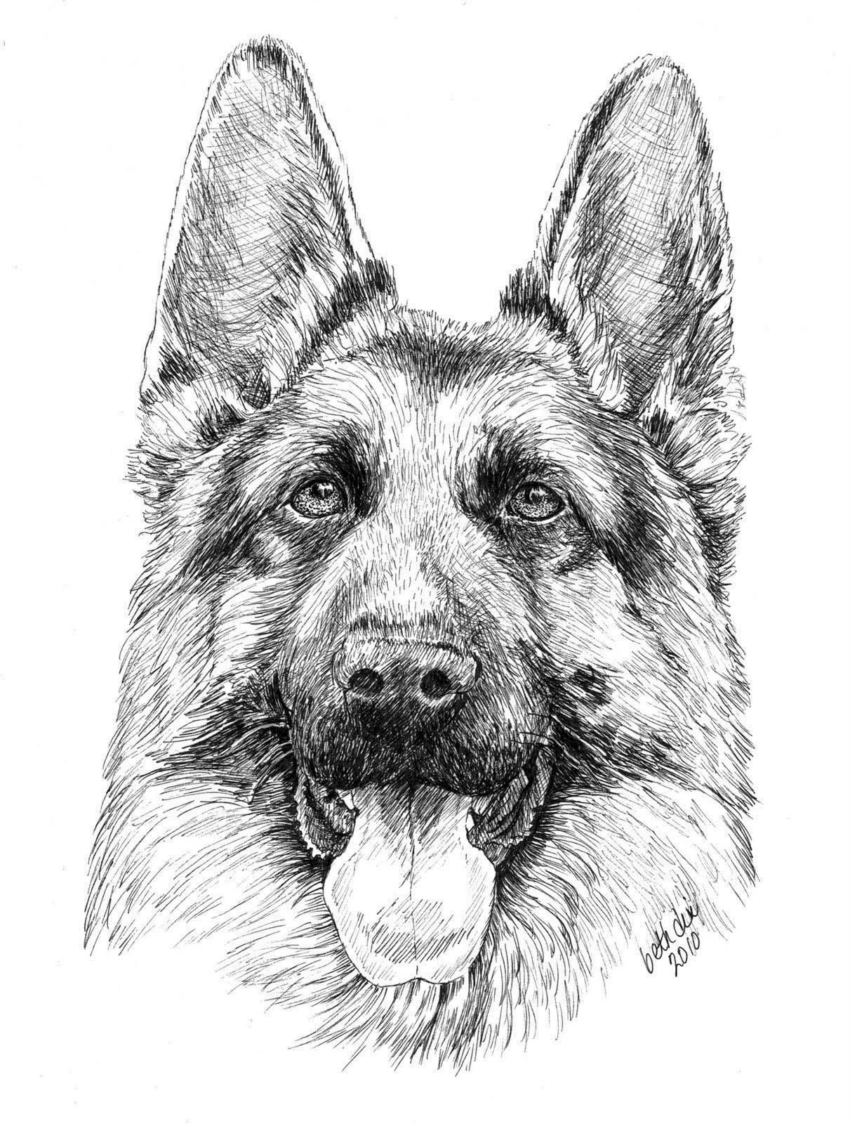 german shepherd pictures to print german shepherd print by ros shiers notonthehighstreetcom pictures to print german shepherd