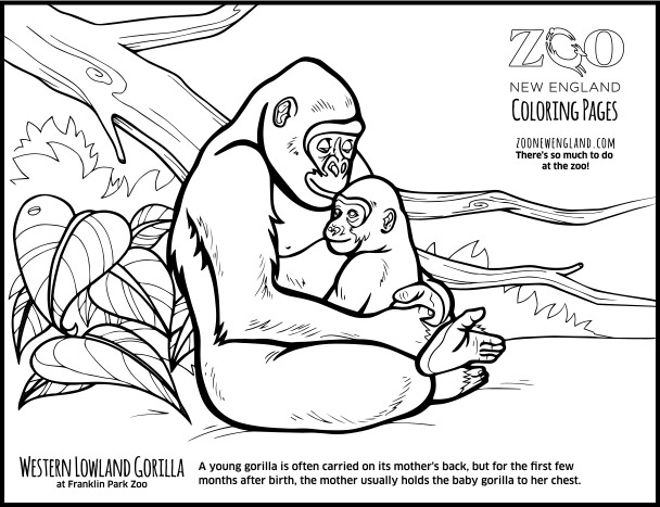 gorilla coloring pages color a gorilla gorilla coloring pages