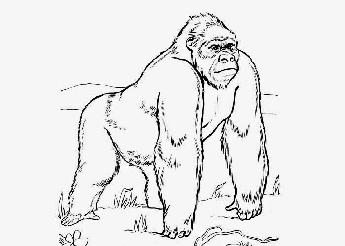 gorilla coloring pages free gorilla coloring pages pages gorilla coloring