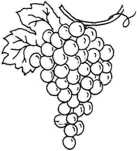 grapes pictures for colouring free grapes coloring pages fantasy coloring pages grapes pictures for colouring