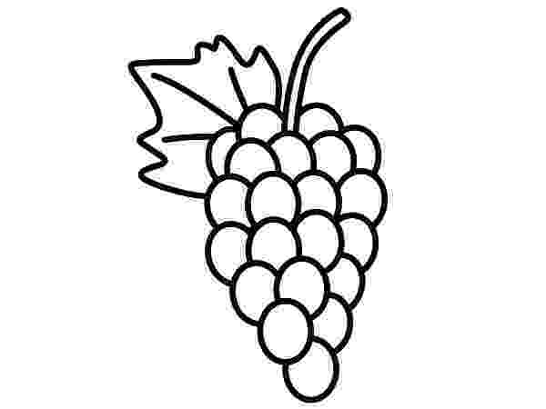 grapes pictures for colouring free grapes coloring pages pictures for grapes colouring