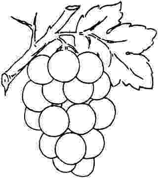 grapes pictures for colouring grape drawing clipart best pictures grapes for colouring
