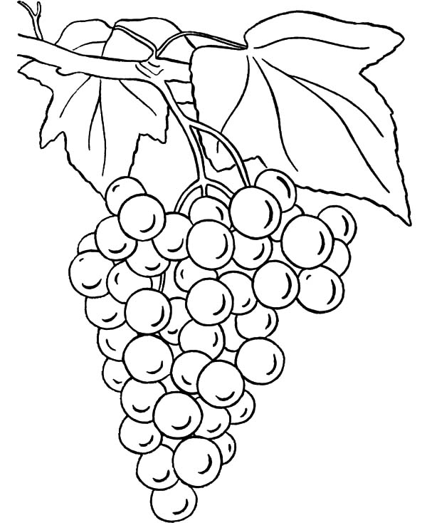 grapes to color grapes coloring page free printable coloring pages to color grapes