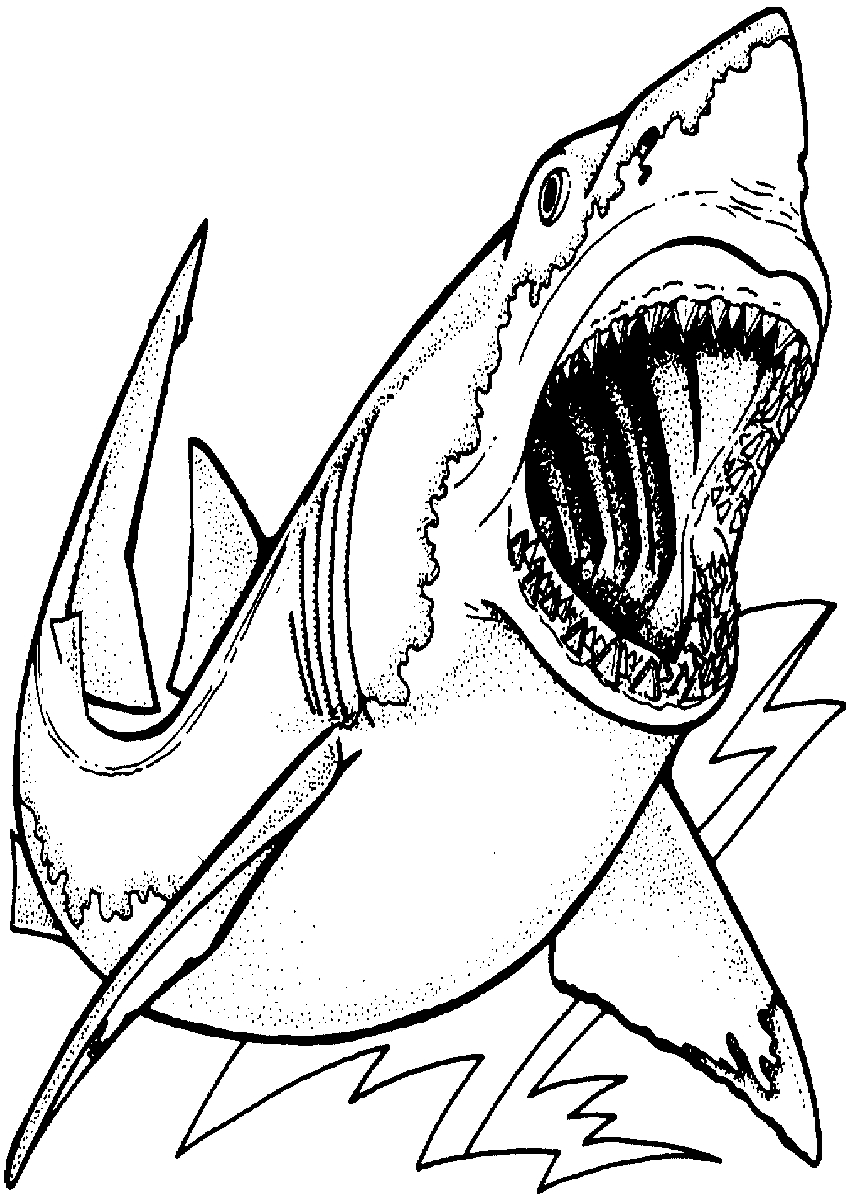 great white shark pictures to color 73 best shark coloring pages images shark coloring pages white shark pictures color to great
