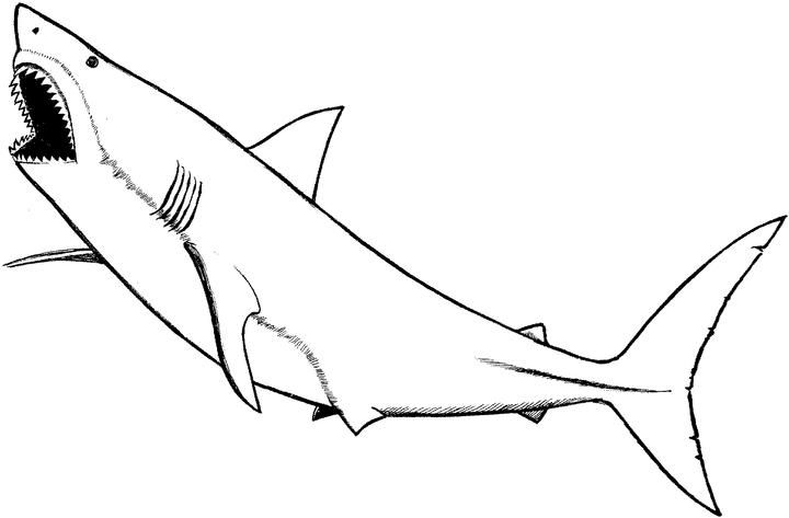 great white shark pictures to color free printable shark coloring pages az coloring pages white great to shark color pictures