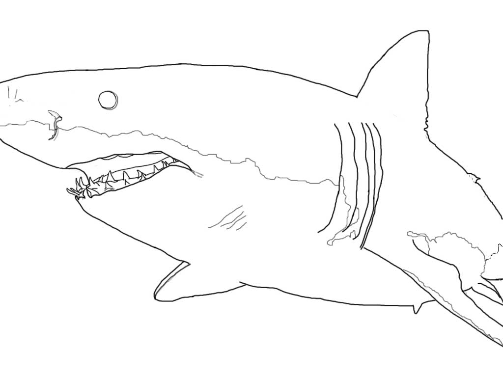 great white shark pictures to color great white shark coloring pages downloadable and to white shark great pictures color