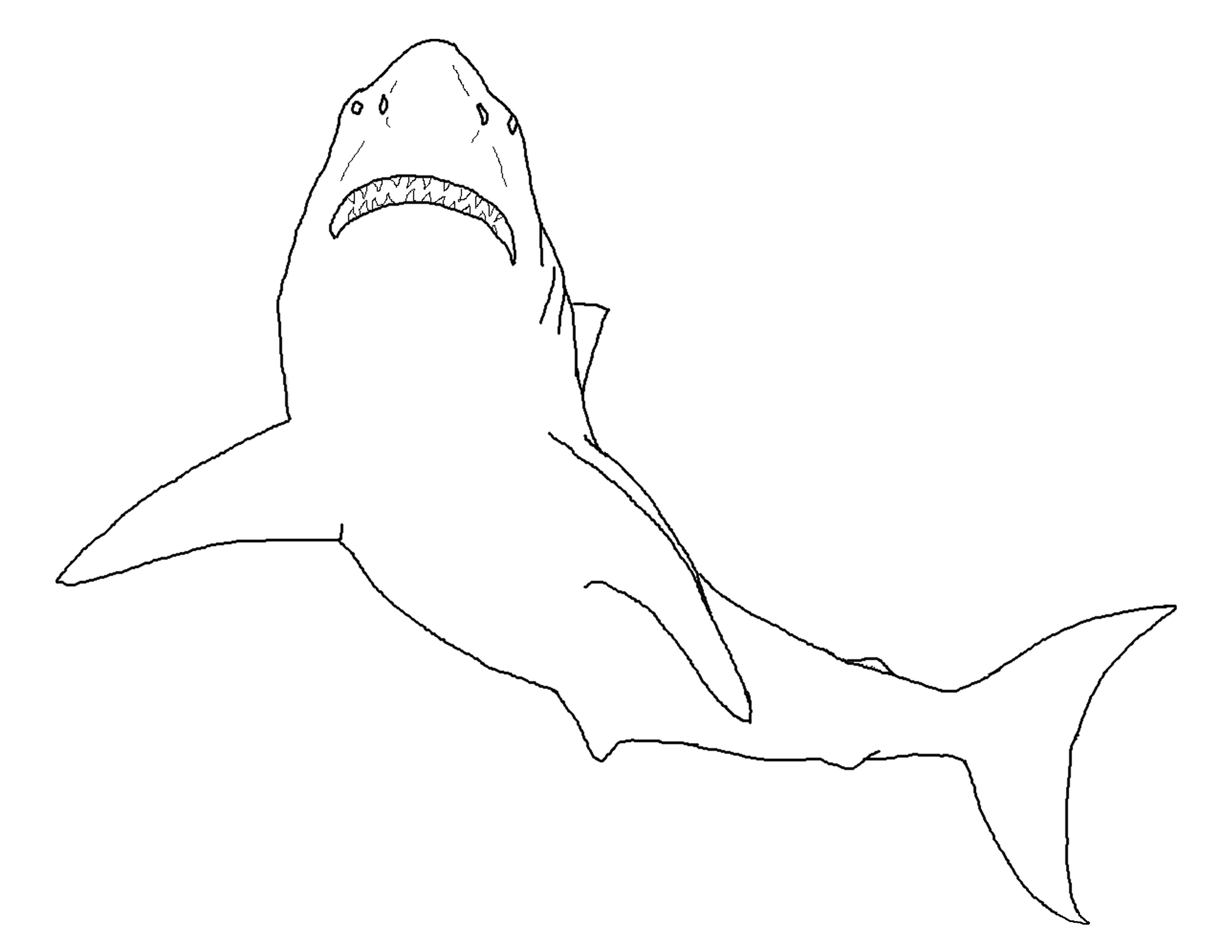 great white shark pictures to color great white shark coloring pages to download and print for shark great to color white pictures