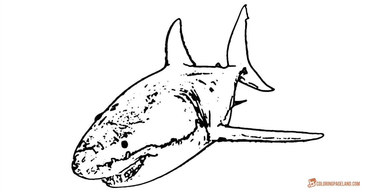 great white shark pictures to color great white shark coloring pages to download and print for white to pictures great color shark