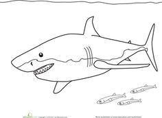 great white shark pictures to color great white shark coloring pages white great color to pictures shark
