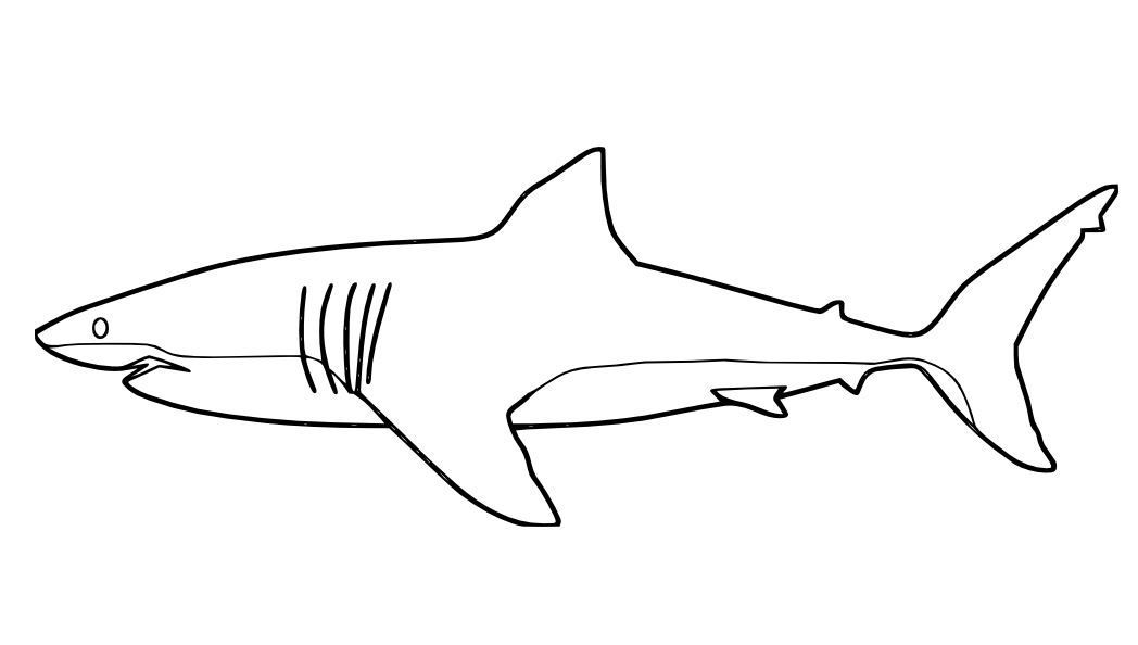 great white shark pictures to color shark jaws coloring pages for kids shark jaws coloring shark white great to color pictures