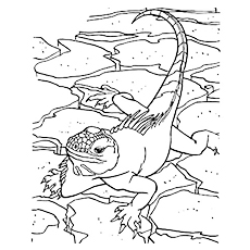 green iguana coloring page green iguana coloring download green iguana coloring for iguana page green coloring